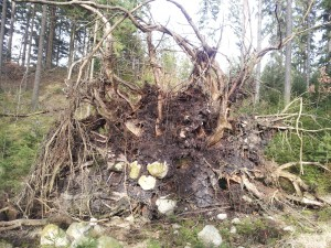 Stigen var en hinderbana skapad av höstens stormar