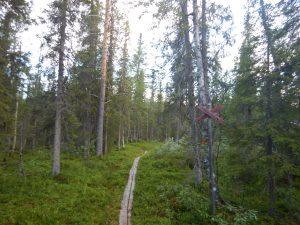 Första delen av vandringen, genom skogen