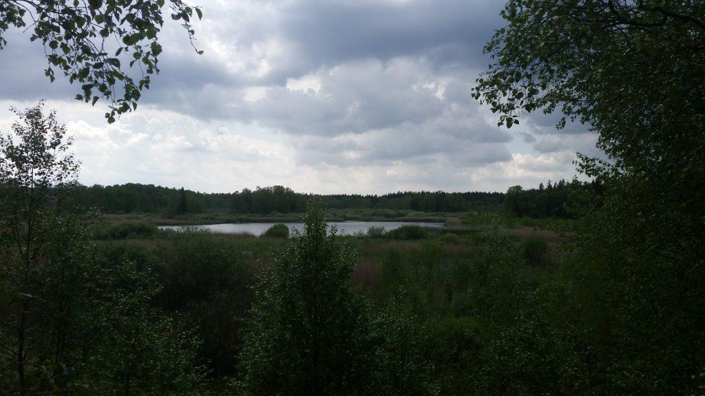 Utsikt från utsiktstorn
